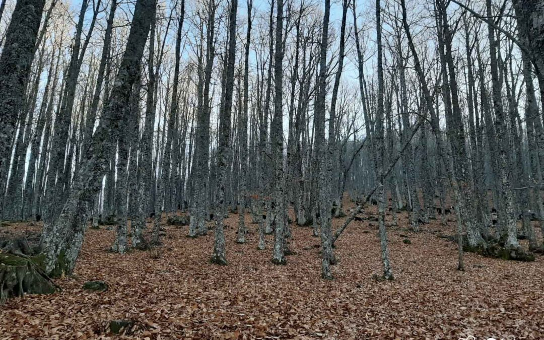 El Castañar de El Tiemblo, Reserva Natural en Ávila